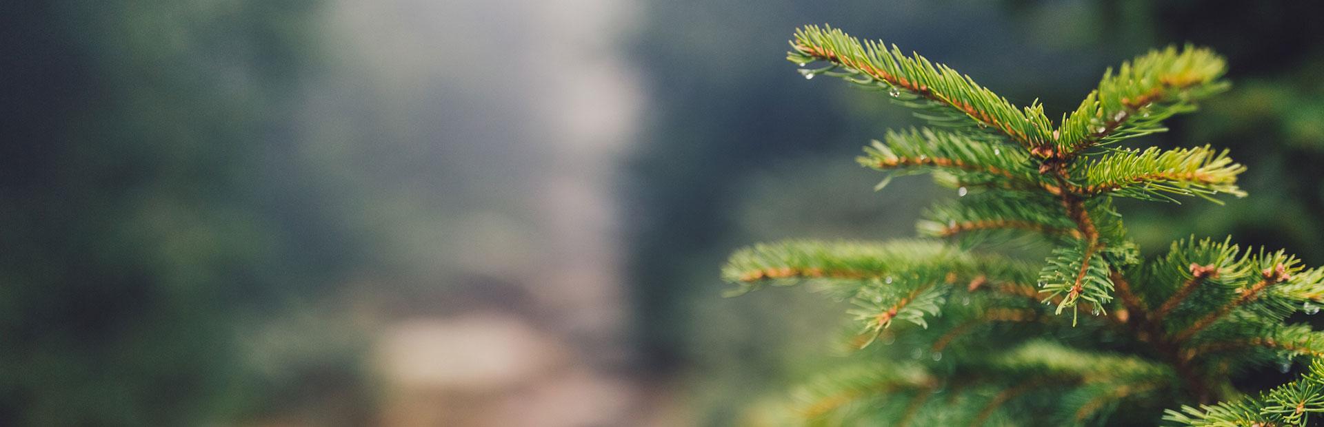 West Pines Behavioral Health Wheat Ridge Co Scl Health Scl