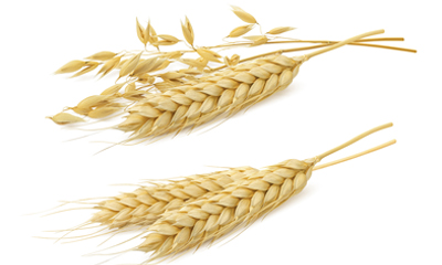 Food Allergy Inline Wheat